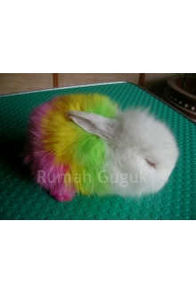 Rainbow Bunny Wm